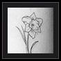 daffodil tattoo design